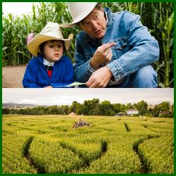 Denver Botanic Gardens Corn Maze
