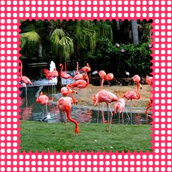 Flamingo Gardens - Garden of Lights